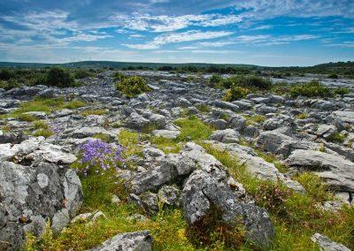 The Burren, Clare (1)